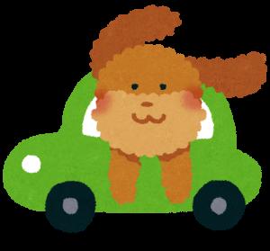 dog_drive_car