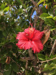 フロントスタッフの日常 沖縄の旅編④です☀