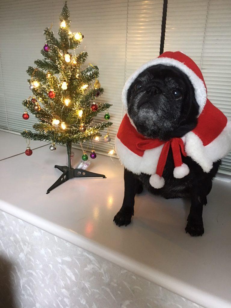 ぽぽちゃんの巻*我が家もクリスマスツリーを飾りました🎄