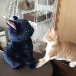 仔猫のガブちゃん*ティブとの対面