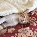 仔猫のガブちゃん*可愛い寝顔❤︎