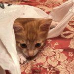 仔猫のガブちゃん*ビニール袋