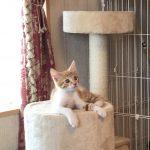 仔猫のガブちゃん*初めてのキャットタワー