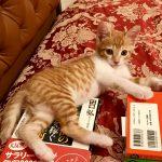 仔猫のガブちゃん*本でも読もうかな♪