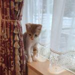 仔猫のガブちゃん*タッセルもおもちゃに♪