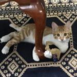 仔猫のガブちゃん*「ぼくのだよ!!」