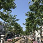 鎌倉散歩*竹林が美しい報国寺