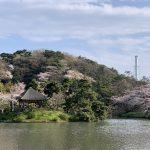 横浜散歩*三渓園でお花見