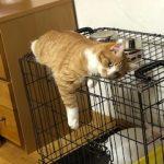 ♡猫🐈のいる暮らし♡ ②