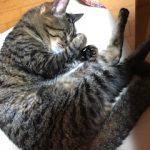 ♡猫🐈のいる暮らし♡ ③