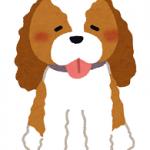♡犬🐶もいた暮らし♡②