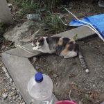 ♡猫🐈のいる暮らし♡ ⑨