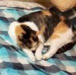 ♡猫🐈のいる暮らし♡ ⑩